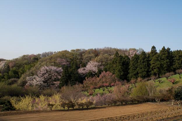 【花桃の丘の眺め】1