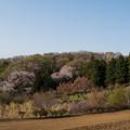 Photos: 【花桃の丘の眺め】1
