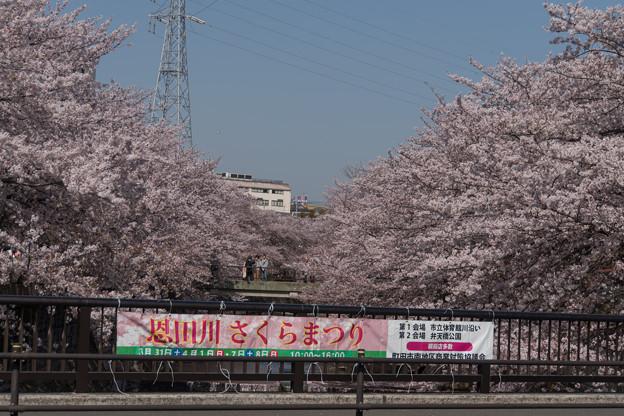 【恩田川の桜】1-1