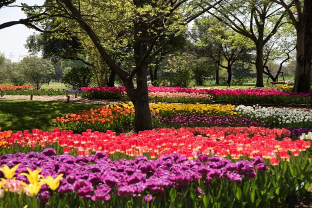 昭和記念公園【渓流広場の景色】2-2