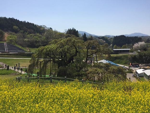東北お花見ツアー【三春の滝桜の葉桜】4