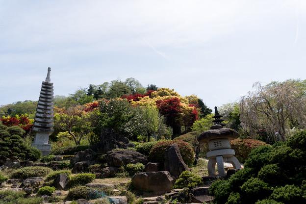 東北お花見ツアー【花見山公園の庭園】