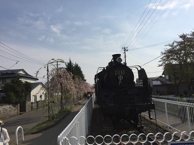 東北お花見ツアー【日中線しだれ桜並木】2