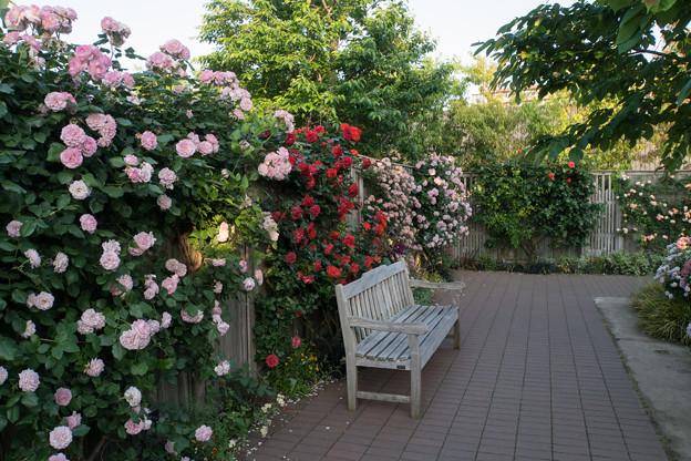 YEG【バラ園の景色】2-2