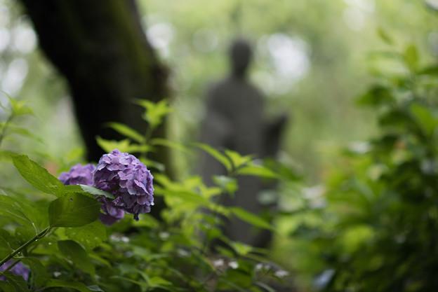 浄慶寺【紫陽花と聖人】1