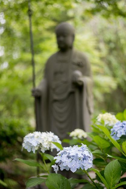 浄慶寺【紫陽花と聖人】2