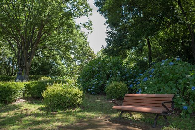 昭和記念公園【あじさいロードの景色】3