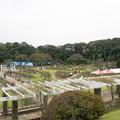 写真: 生田緑地ばら苑の眺め
