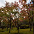 箱根美術館【庭園内の紅葉】2