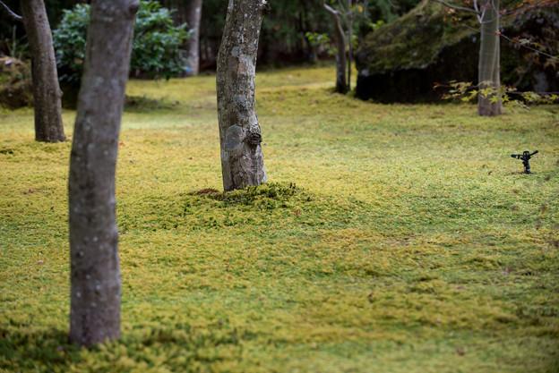 箱根美術館【庭園内に敷き詰められた苔】
