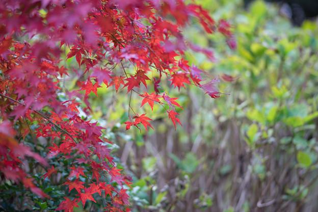 上のホテル【紅葉色とりどり】