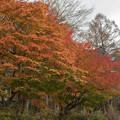 山中湖【渋い紅葉】2
