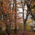 山中湖【渋い紅葉】5