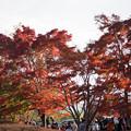 河口湖【もみじ回廊の紅葉】1