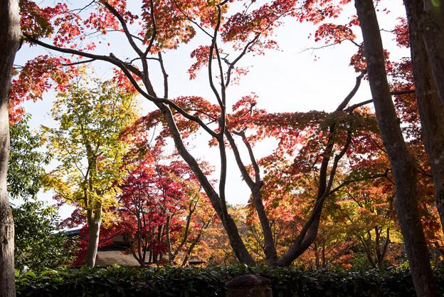 昭和記念公園【日本庭園:清池軒周辺の紅葉】3