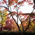 Photos: 昭和記念公園【日本庭園:清池軒周辺の紅葉】3