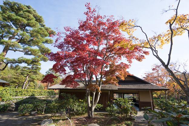昭和記念公園【日本庭園:清池軒周辺の紅葉】5
