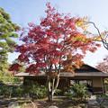Photos: 昭和記念公園【日本庭園:清池軒周辺の紅葉】5