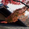 Photos: 昭和記念公園【日本庭園:清池軒周辺の紅葉】6