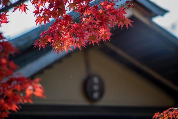 昭和記念公園【日本庭園:清池軒周辺の紅葉】7