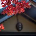 Photos: 昭和記念公園【日本庭園:清池軒周辺の紅葉】7