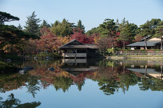 昭和記念公園【日本庭園:池と紅葉】2