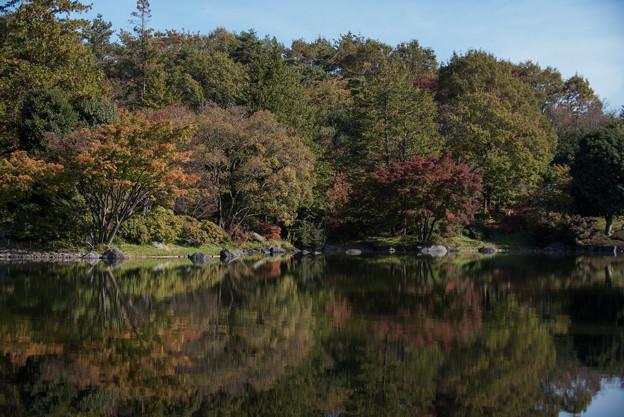 昭和記念公園【日本庭園:池と紅葉】6