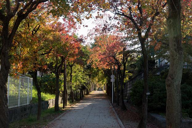 Photos: 【近所の緑道】1