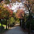 【近所の緑道】1