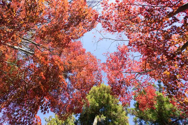 薬師池公園【旧荻野家手前の紅葉】7