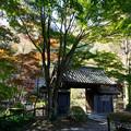 薬師池公園【旧荻野家住宅の紅葉】1