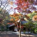 薬師池公園【旧荻野家住宅の紅葉】5