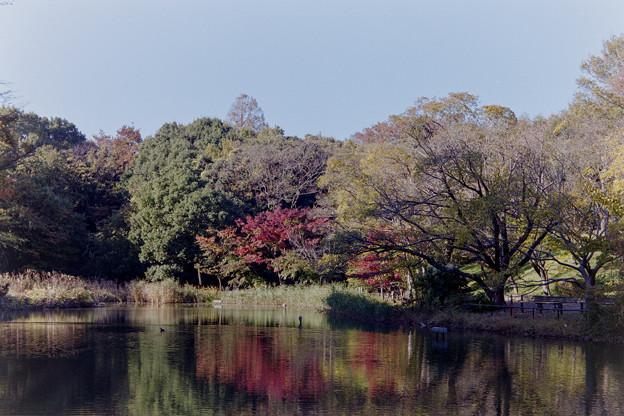 【鴨池沿いの紅葉】1