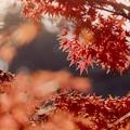 【鴨池沿いの紅葉】5