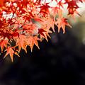【鴨池沿いの紅葉】6