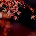 【鴨池沿いの紅葉】7