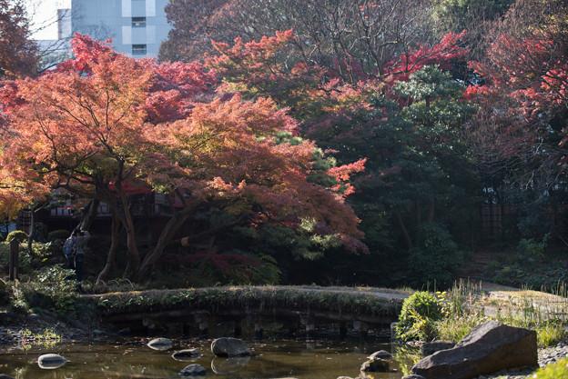 小石川後楽園【大堰川近辺の紅葉】2