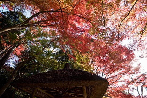 小石川後楽園【丸屋近辺の紅葉】4