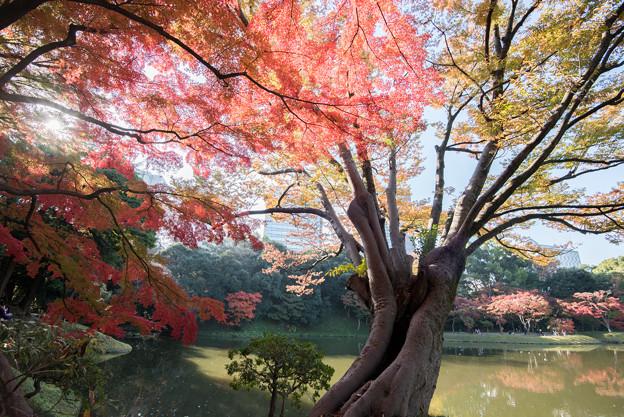 小石川後楽園【異形灯篭近辺の紅葉】2