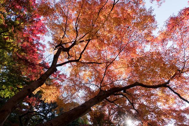 小石川後楽園【異形灯篭近辺の紅葉】3