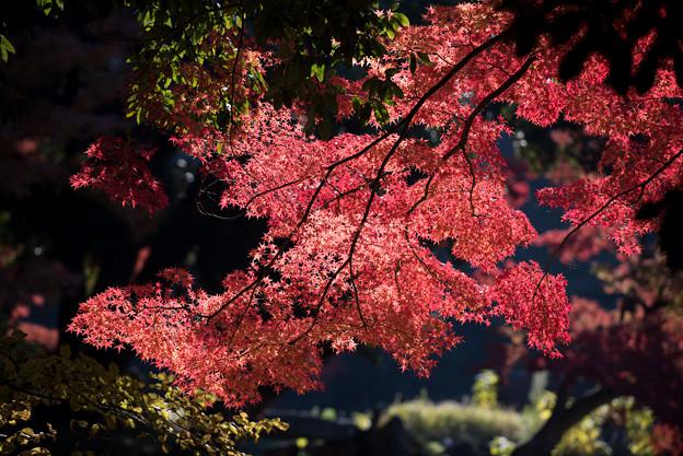 小石川後楽園【蓬莱島近辺の紅葉】2