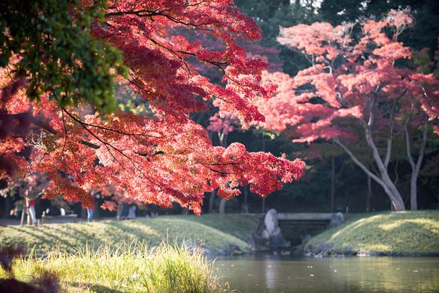 小石川後楽園【蓬莱島近辺の紅葉】3
