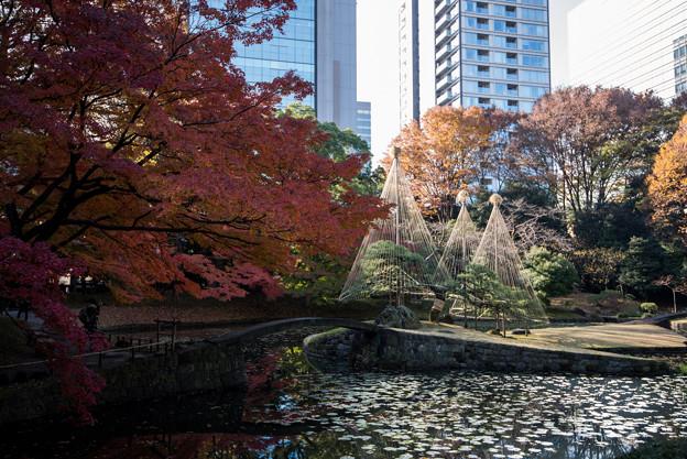 小石川後楽園【内庭近辺の紅葉】2