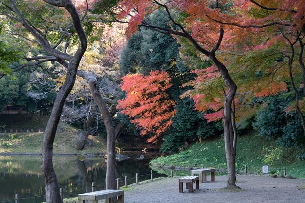 小石川後楽園【大泉水近辺の紅葉】1