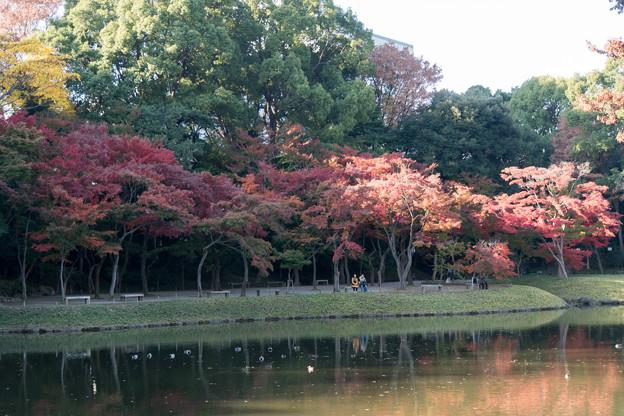 小石川後楽園【大泉水近辺の紅葉】2
