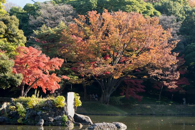小石川後楽園【大泉水近辺の紅葉】3