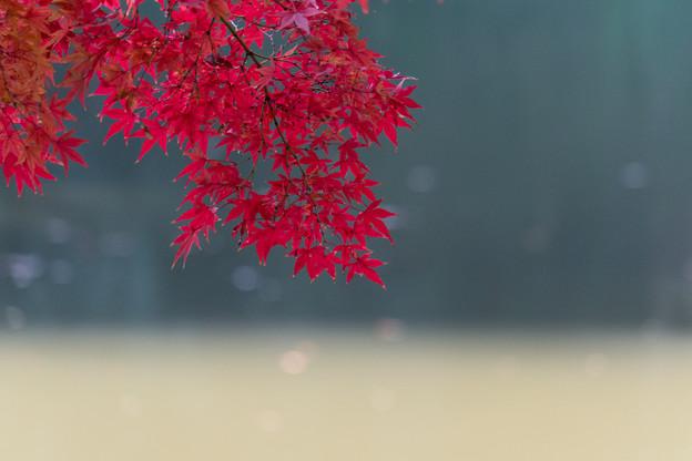 小石川後楽園【大泉水近辺の紅葉】4