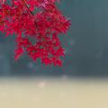 Photos: 小石川後楽園【大泉水近辺の紅葉】4