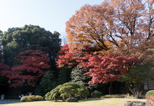 小石川後楽園【松原近辺の紅葉】1