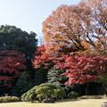 Photos: 小石川後楽園【松原近辺の紅葉】1